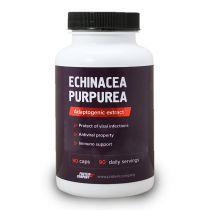 Echinacea purpurea / Экстракт эхинацеи / Капсулы / 90 порций / 90 капсул